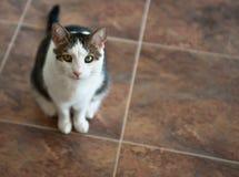 Gato en suelo de azulejo Imagenes de archivo