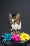 Gato en taburete Imagenes de archivo