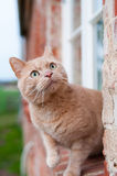 Gato en travesaño Fotografía de archivo libre de regalías