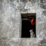 Gato en travesaño de la ventana Foto de archivo libre de regalías