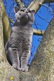 Gato en un árbol Imágenes de archivo libres de regalías
