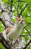 Gato en un árbol Foto de archivo