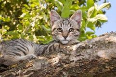 Gato en un árbol Imagen de archivo libre de regalías