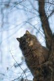 ¡Gato en un árbol! Fotos de archivo