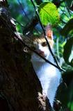 Gato en un árbol Fotos de archivo libres de regalías