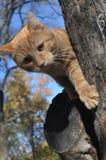 Gato en un árbol Fotografía de archivo libre de regalías