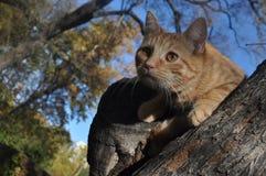Gato en un árbol Fotos de archivo