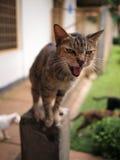 Gato en un abrigo animal Foto de archivo libre de regalías