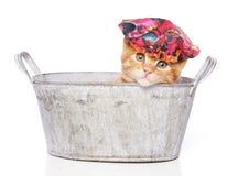 Gato en un baño con el casquillo de ducha Imagen de archivo