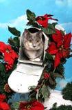 Gato en un buzón de la Navidad Fotos de archivo