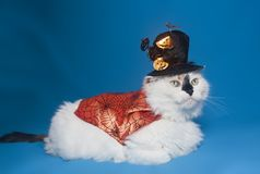 Gato en un cabo de Halloween y un sombrero fotografía de archivo