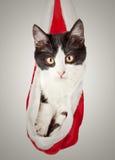 Gato en un casquillo del Año Nuevo. El gatito oculta en el sombrero rojo de Santa Claus Foto de archivo