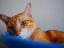 Gato en un cuenco Imagenes de archivo