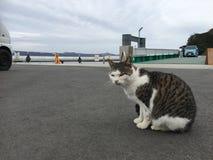 Gato en un embarcadero Imagen de archivo libre de regalías