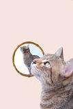 Gato en un espejo Foto de archivo libre de regalías