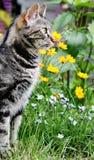 Gato en un jardín Fotografía de archivo libre de regalías