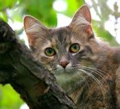 Gato en un manzano Fotografía de archivo libre de regalías