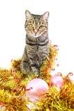 Gato en un oropel del Año Nuevo Fotografía de archivo