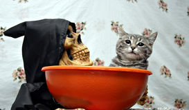 Gato en un plato del caramelo Fotografía de archivo