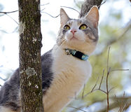 Gato en un árbol que mira hacia fuera su mundo Fotos de archivo