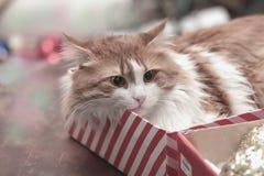 Gato en un rectángulo Fotos de archivo libres de regalías