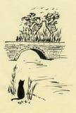 Gato en un Riverbank Foto de archivo