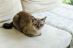 Gato en un sofá Fotos de archivo libres de regalías