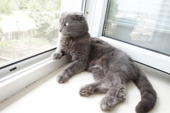 Gato en un travesaño de la ventana Foto de archivo