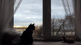 Gato en un travesaño de la ventana almacen de video