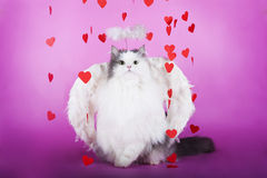 Gato en un vestido del ángel Foto de archivo