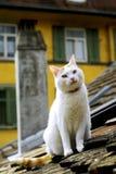 Gato en una azotea Fotos de archivo