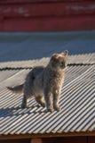 Gato en una azotea caliente del estaño Imagenes de archivo