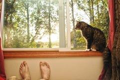 Gato en una célula de la ventana Imagen de archivo