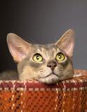 Gato en una cama del animal doméstico Fotos de archivo