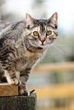Gato en una cerca Imagen de archivo libre de regalías