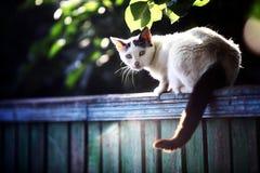 Gato en una cerca Foto de archivo libre de regalías