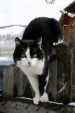 Gato en una cerca Fotografía de archivo