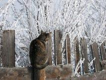 Gato en una cerca fría del tablón Imágenes de archivo libres de regalías