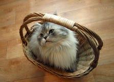 Gato en una cesta - 2 Fotografía de archivo