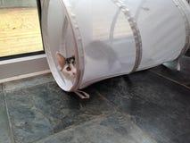 Gato en una cesta Fotografía de archivo