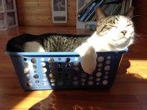 Gato en una cesta Imágenes de archivo libres de regalías