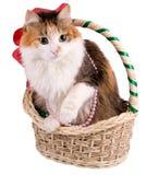 Gato en una cesta de la Navidad Imágenes de archivo libres de regalías