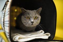 Gato en una clínica veterinaria imágenes de archivo libres de regalías