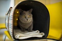 Gato en una clínica veterinaria imagenes de archivo