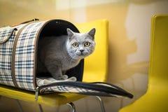 Gato en una clínica veterinaria foto de archivo
