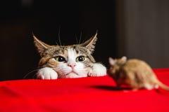 Gato en una emboscada en una caza del ratón imagen de archivo libre de regalías