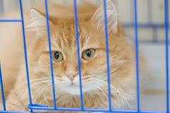 Gato en una jaula Foto de archivo libre de regalías