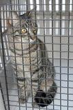 Gato en una jaula Imagenes de archivo