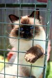 Gato en una jaula Fotos de archivo