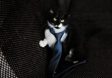 Gato en una limusina Fotos de archivo libres de regalías